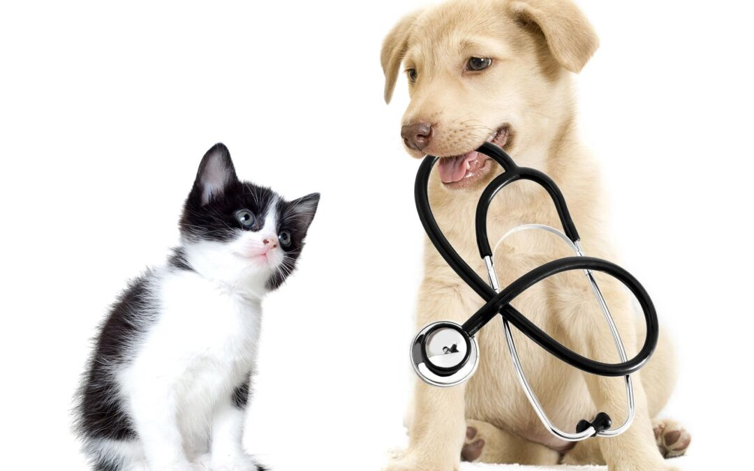 Keeping Pets and People Healthy